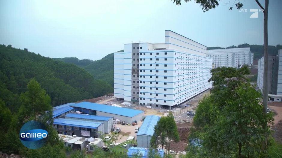 """""""Fake News""""? Gibt es in China tatsächlich Hotelanlagen für Schweine"""