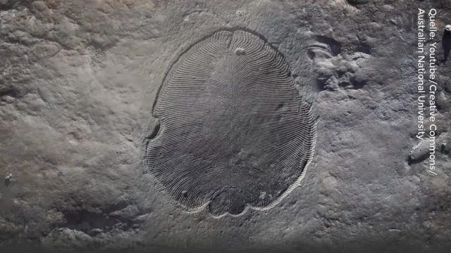 """Ältestes bekanntes Tier der Erde: Forscher identifizieren """"bizarre Kreatur"""""""