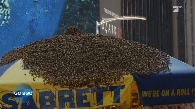 Bienen-Alarm in Manhattan