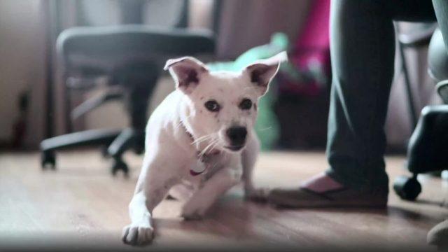 Hund schnappt sich Gebiss - und sorgt für das vermutlich lustigste Bild des Jahres