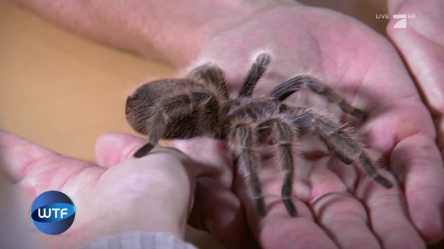 Spinnenphobie: So soll man die Angst vor Spinnen besiegen