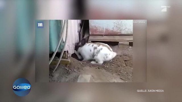 Hase rettet eine Katze