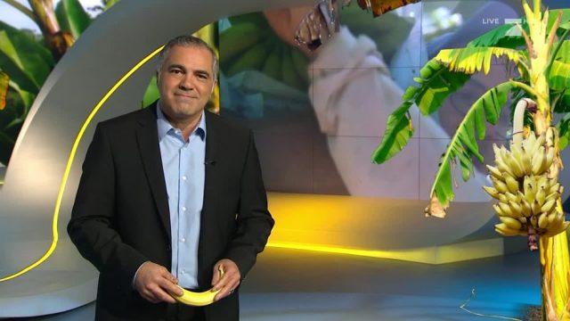 Montag: Arbeiten auf einer Bananen-Plantage - ein Selbstexperiment