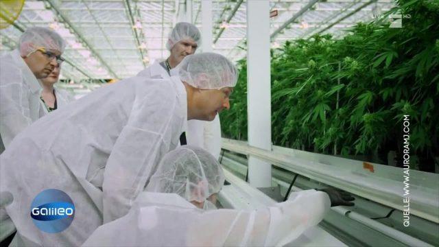 Cannabis in Deutschland: Ein Jahr nach der Legalisierung
