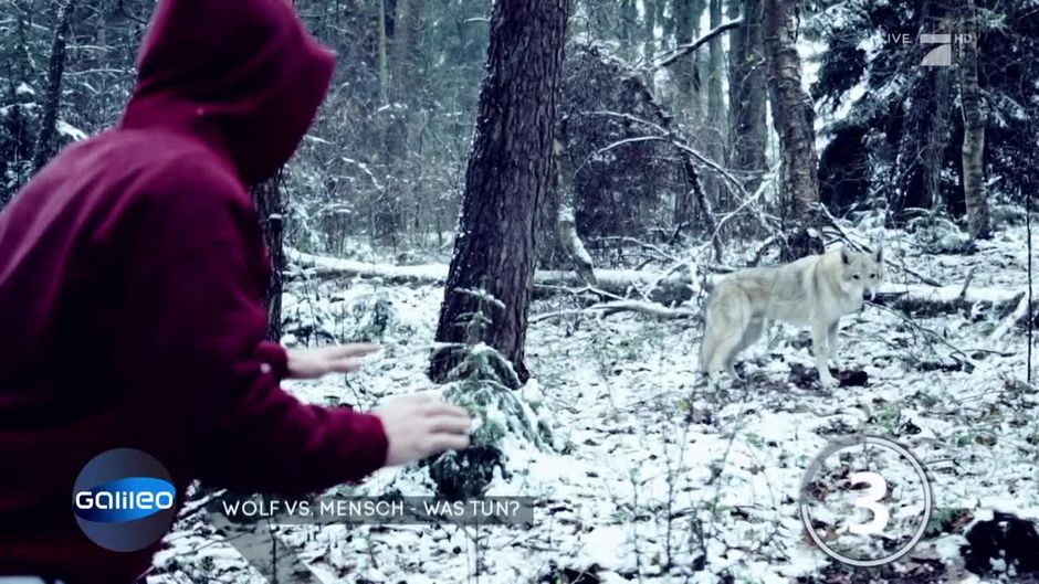 Was kann man tun bei einer Wolf-Attacke?