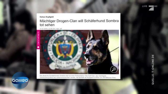 Finde die Fake-News: Kopfgeld auf einen Hund