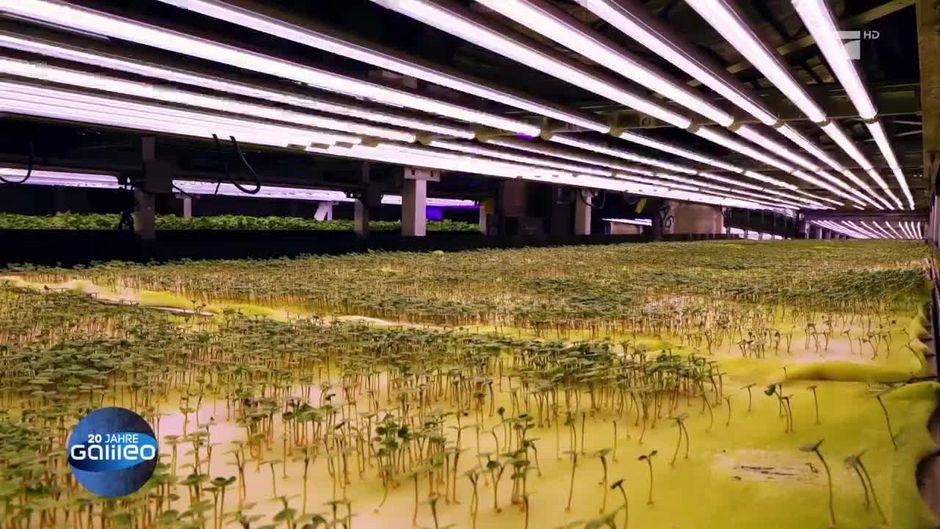 Vertikales Farming: So sieht der Bauernhof der Zukunft aus