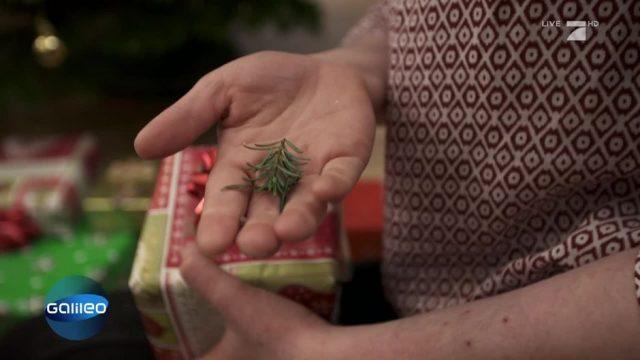 Was kann man gegen frühzeitiges Nadeln vom Weihnachtsbaumes tun?