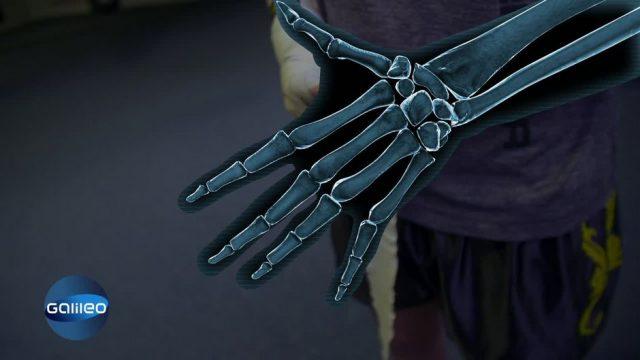 Bodypuzzle: Skelett