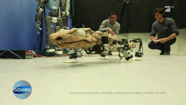 Forscher bauen einen Dino-Roboter - Aber warum?