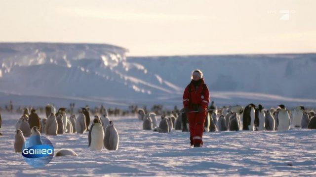 Im ewigen Eis: Mit den Pinguinforschern durch die Antarktis