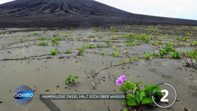 Good news: Leben auf namenloser Insel im Ozean