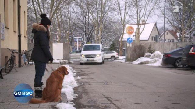 Hund, Katze und Co.: Welche Regeln gelten für unsere Vierbeiner?