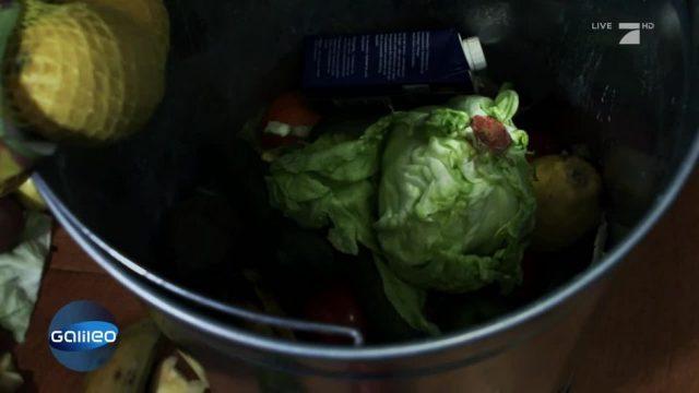 Lebensmittelverschwendung: Warum schmeißen wir so viel weg?