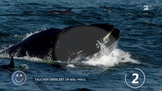 Taucher wurde von einem Wal verschluckt!