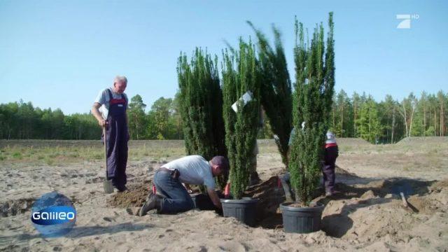 Bäume pflanzen gegen Terror: Baum vs. Bombe