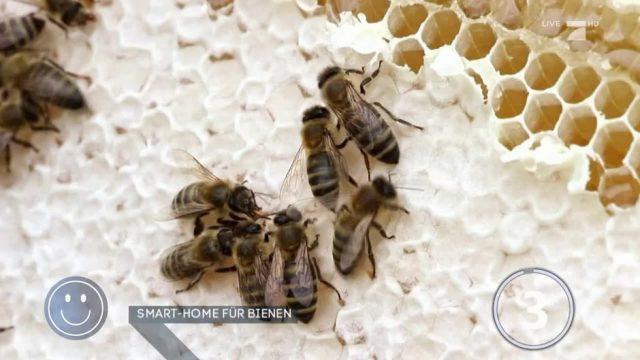 Smart-Home für Bienen: Kann das ihr Überleben erleichtern?