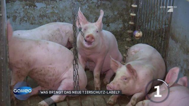 Tierrechte: Informationen über die Haltung auf der Verpackung