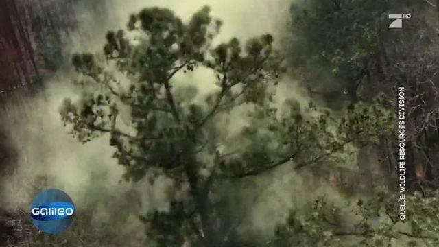 Umstürzende Bäume: Allergiker-Alarm
