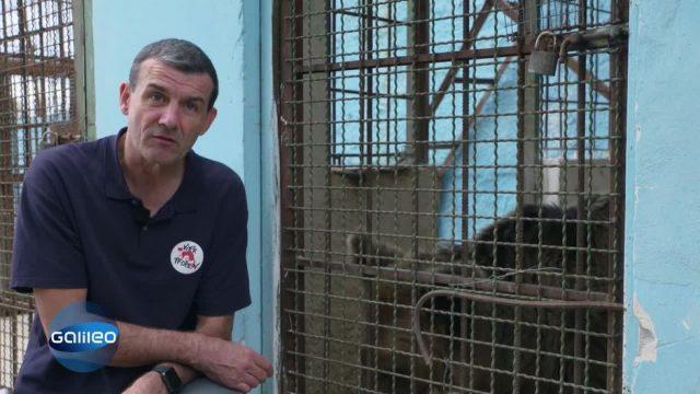 Die Bärenretter: Deutsche Tierschützer im Einsatz