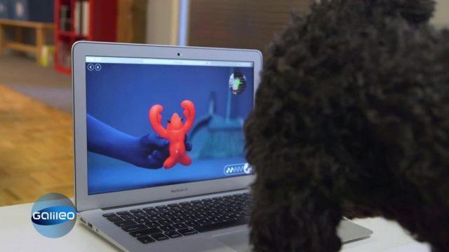 Können Hunde im Internet shoppen?