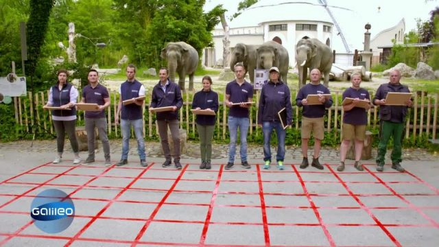 Quiz: Du gegen den Zoo