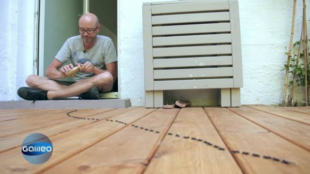 Sieben auf einen Streich: Wie man Mücke und Co. loswird