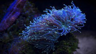 Leuchtende Korallen