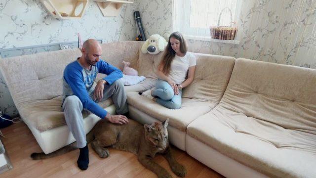 Messi: Ein Puma als Haustier