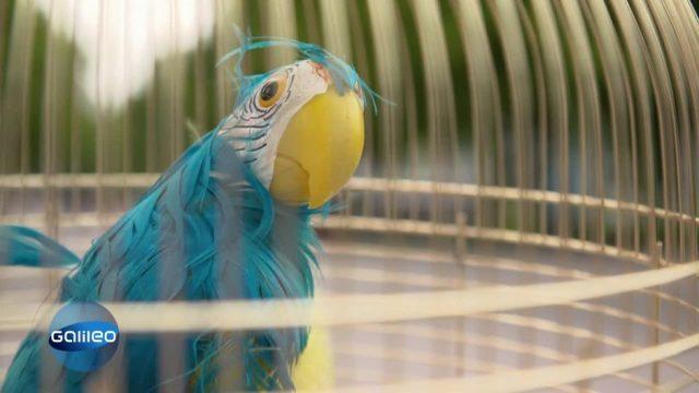 Schlaumeier: Einen Vogel haben