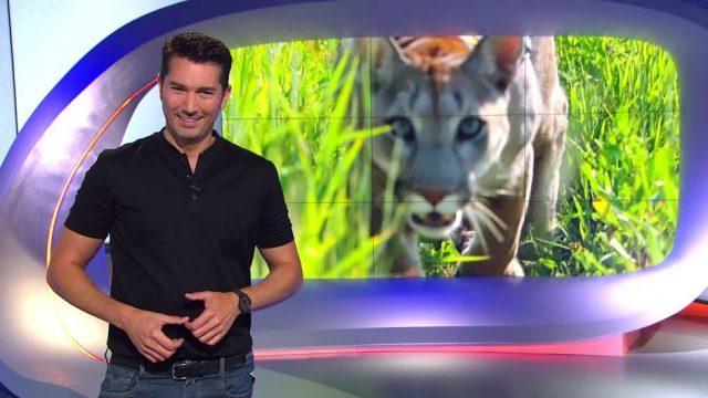 Sonntag: Puma als Haustier