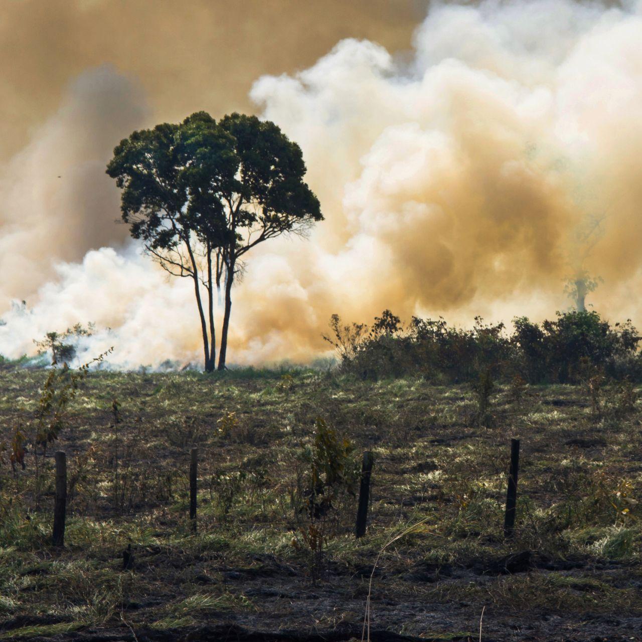 Alarmstufe Rot im Amazonas-Regenwald, aber du kannst ihn retten