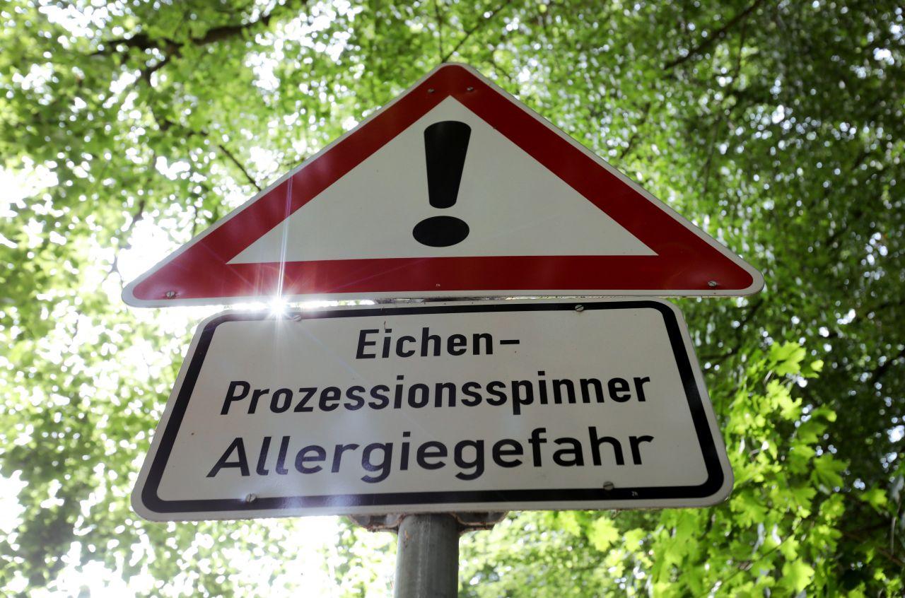 Schild Warnung Eichenprozessionsspinner