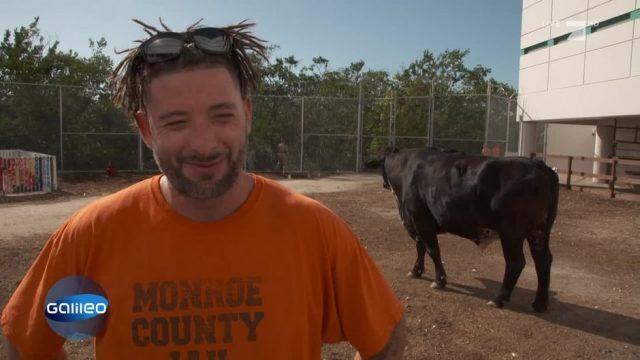 Der Knast-Zoo von Florida