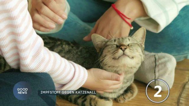 Forscher entwickeln Impfstoff gegen Katzenallergie