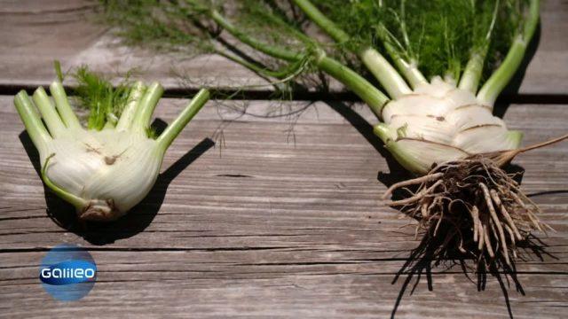 Leaf to root-Gerichte: So kannst du Blatt und Wurzel von Gemüse und Obst lecker verarbeiten