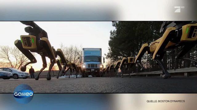Robo-Dogs als Abschleppdienst