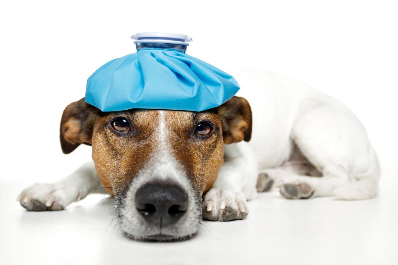 Eichenprozessionsspinner Auswirkung Hunde