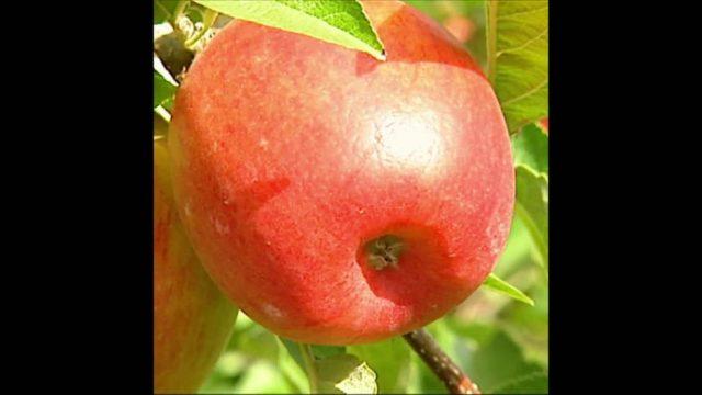 Ökologischer Fußabdruck: Die Reise eines Apfels -10s