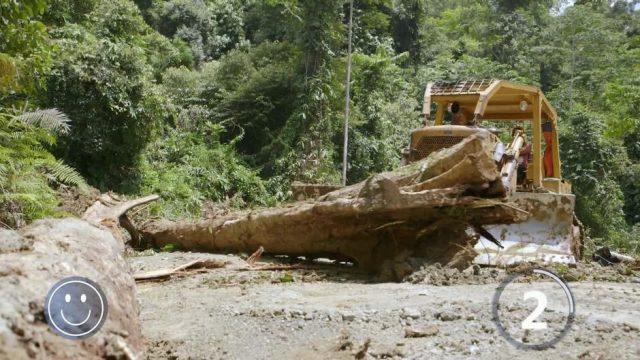 Neue Software soll illegale Abholzung im Regenwald verhindern