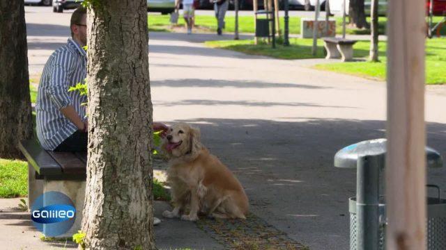 Promillegrenze für Hundehalter in Wien?