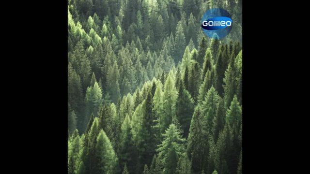 So viel Holz wächst in Deutschland pro Tag