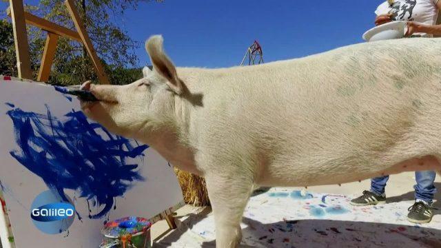 Tierische Helfer: Tiere mit besonderen Jobs