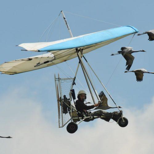Vogelmann Christian Moullec fliegt mit den Gänzen Richtung Süden.