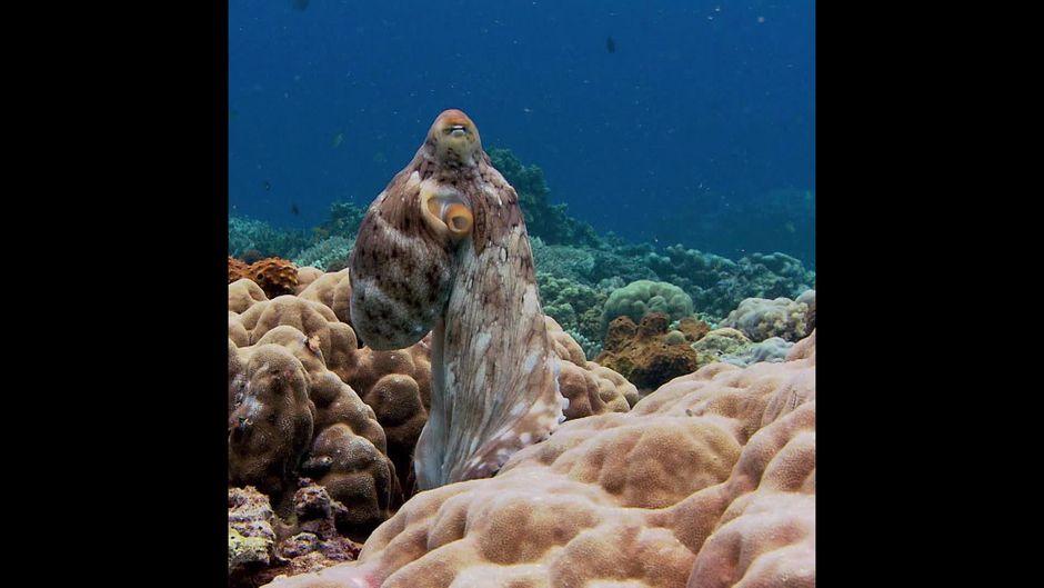 So sieht es aus, wenn ein Oktopus träumt - 10s