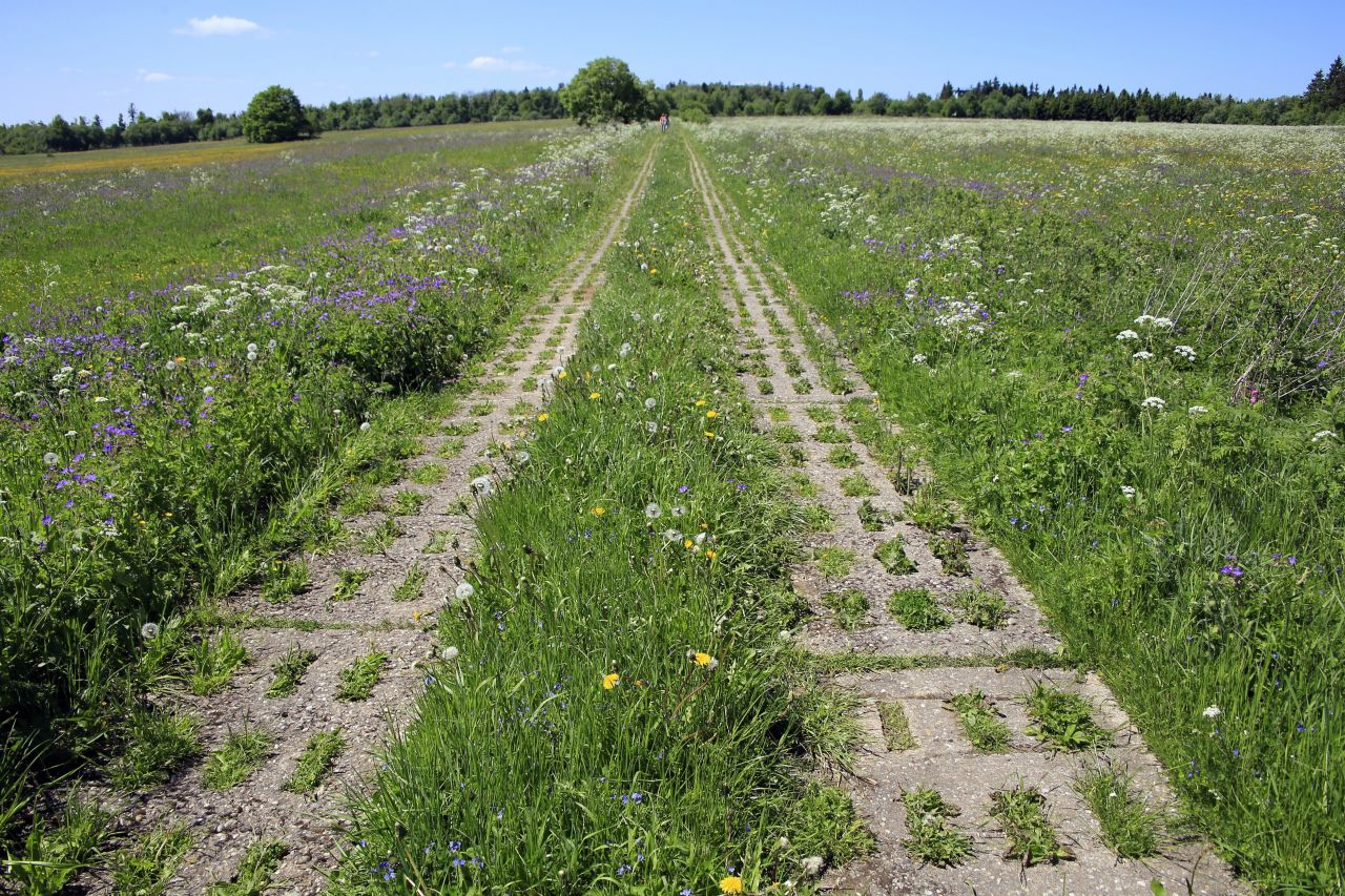 Auch dieser ehemalige Kolonnenweg gehört zu dem Naturschutzprojekt.