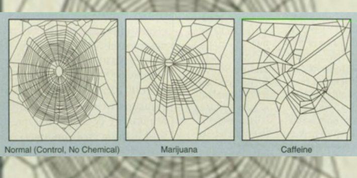 Spinnennetz, wenn Spinnen Kaffee oder Drogen verabreicht bekamen