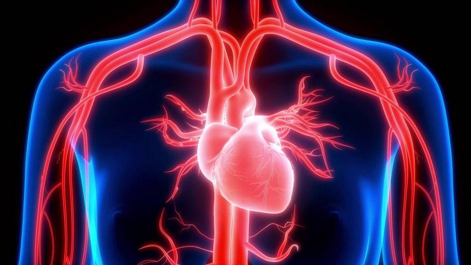So funktioniert unser Herz