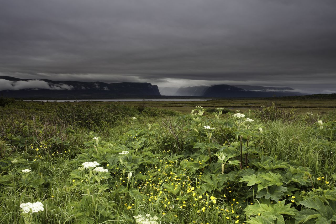 Neufundlandtief