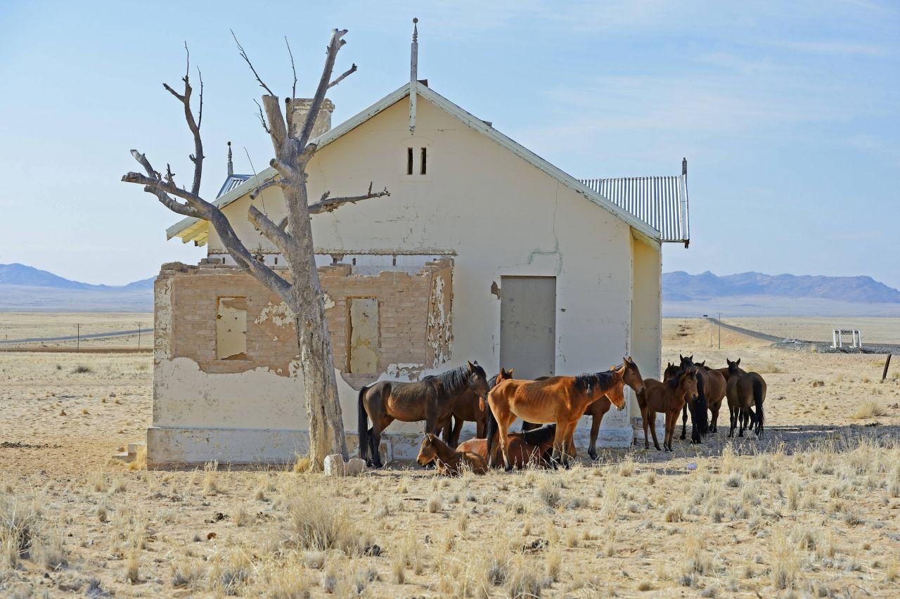 Pferde vor unbewohntem Haus